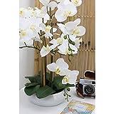 Zoom IMG-2 linea decorativa orchidea bianca artificiale