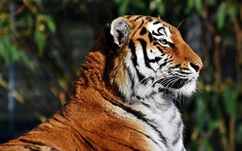 Puzzle 500 Piezas Rompecabezas Adultos DIY Grande Wooden Jigsaw Puzzles Tigre De Bengala Animal De La Selva Puzzle Adultos 500 Piezas Rompecabezas De Juguete Regalo