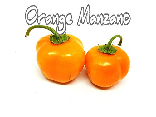 GEOPONICS (25+ Orange Manzano Rocotos Pfeffer sät