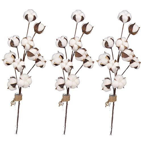 Algodón Tallos Flor, 3 Pzas Algodón Natural Ramo Seco Flores - 10 Cabezas Flor Artificiales Relleno Floral - para Boda Hogar Oficina Fiesta Jardín Etc. - como en la Imagen Show, 3pcs