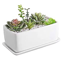 christmas gift guide with succulent garden