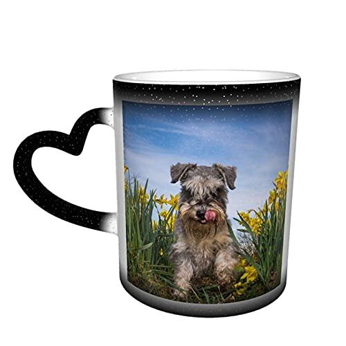 maichengxuan Taza de café unisex de viaje para perros narcisos en miniatura Schnauzer personalizada sensible al calor color cambiante taza de té de leche tazas de café mágicas