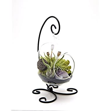 Bliss Gardens Air Plant Terrarium Kit with Amethyst / 6  Oval Glass With Black Stand / Tillandsia Gift / Midnight Forest