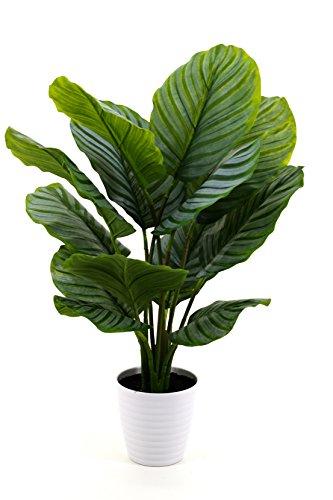artfleur - künstliche Calathea (Korbmarante) im Topf 85cm Kunstpflanze Grünpflanze Topfpflanze Schattenpflanze Pfeilwurz