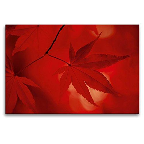 Premium Textil-Leinwand 120 x 80 cm Quer-Format Japanischer Fächerahorn - Herbstfarben | Wandbild, HD-Bild auf Keilrahmen, Fertigbild auf hochwertigem Vlies, Leinwanddruck von Thomas Herzog