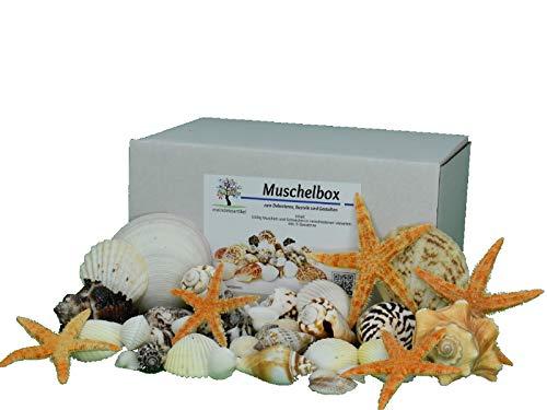 DEKOMUSCHEL BOX - 1000g Bunter-Mix mit Seesternen Maritime Dekoration Muscheln Schnecken Aquarium Basteln und Dekorieren