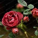 Shopvise Rose Perennial Flowers Seeds Home Garden 50 piezas; Color 15