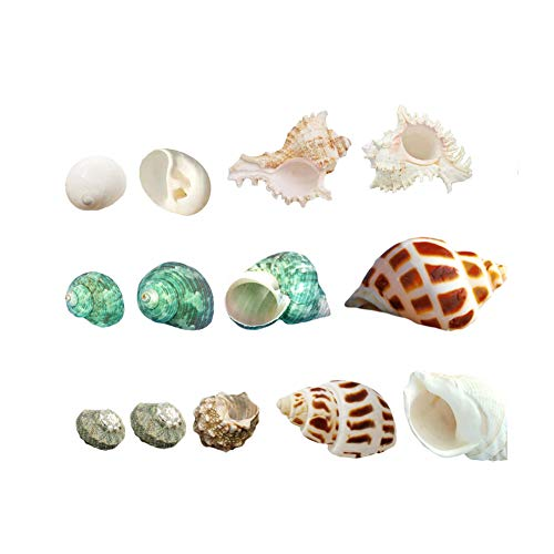 Luckybaby Shell Hermit Crab Shells Large Medium Turbo Seashell Natural Sea Conch (Middle)