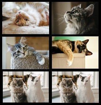 Lot de 6 sets de table en forme de chat – Noir et blanc, tigré, calico, gris, chats moelleux.