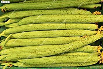 Vistaric 40 pcs/sac Exotic Serviette Gourd Graines Organique En Plein Air Long Long Luffa Cylindrica Éponge Bonsaï Plante En Pot Facile à Cultiver