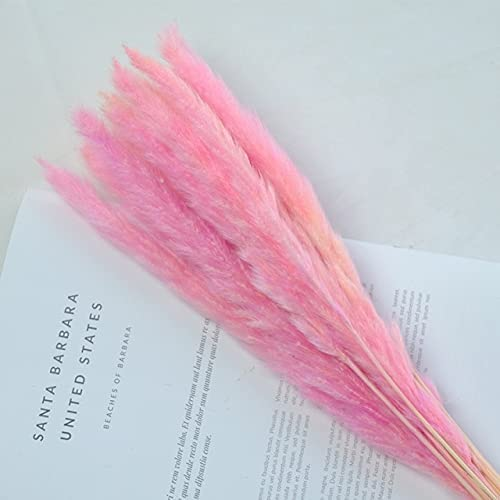 Thecookie 15pcs 3 Color Popular products Available Raw Natu Small White Reed Pink Sale SALE% OFF