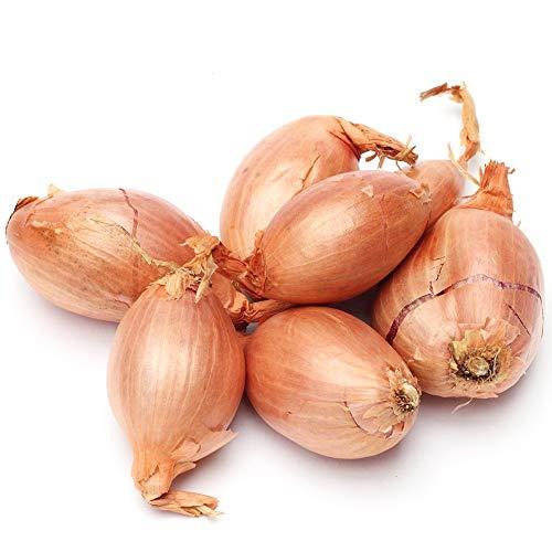 Semi di scalogno - Allium cepa - 855 semi - 855 semi