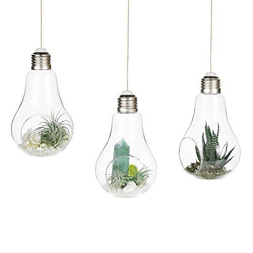 Wankd à suspendre européen Transparent ampoule de forme Vase en verre hydroponique Container Terrarium Plante Pot de fleurs Vase Home Office Décor 3 pcs