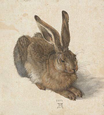 Kunstdruck Der Feldhase Albrecht Dürer Hase Kaninchen Naturstudie Alte Meister A3 066