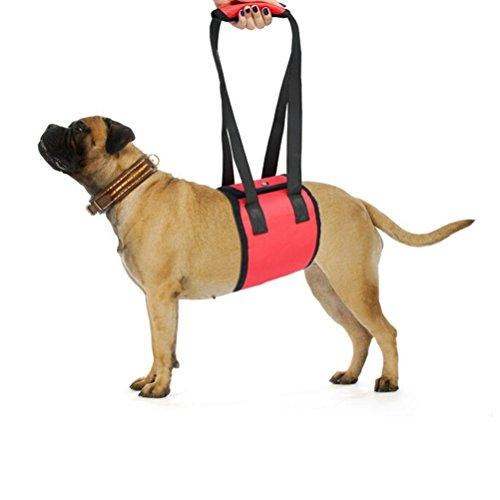 UEETEK Traghilfe /Gehhilfe Geschirr für Hunde Haustier Größe M (rot)