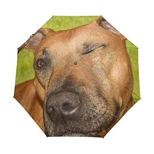 N\C Rhodesian Ridgeback Hundeschirm Reise Mädchen Männer Automatische Offene Kleine Tragetaschen Regenfest 3 Faltbare Sonnenschirme für Frauen UV-Schutz Damen