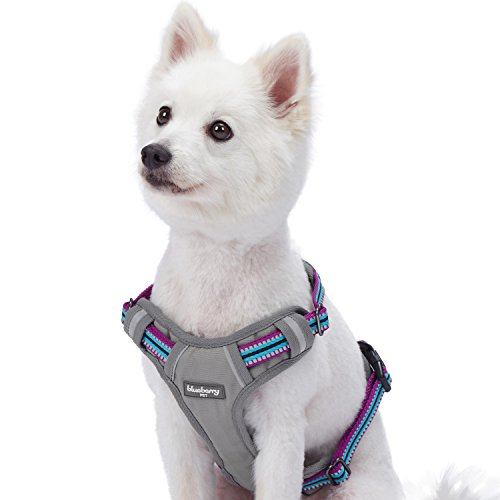 Blueberry Pet 9 Colors Soft & Comfy 3M Reflective Multi-Colored Stripe Mesh Padded No Pull Dog Harness Vest with Back Leash Clips, Medium, Violet & Celeste