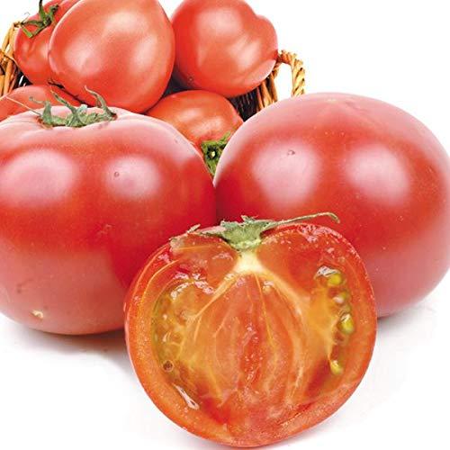 国華園 食品 熊本産他 トマト 3.5�s1箱 野菜