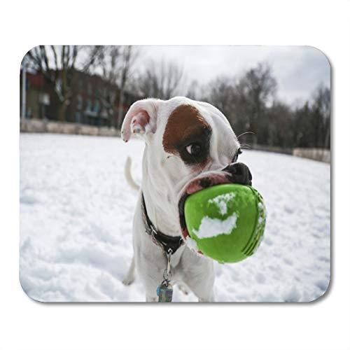 Mauspads, weiße Nahaufnahme des albernen Boxerhundes, der im Frühlingsschnee mit hellgrünem Ball seine große Mund-Farb-Persönlichkeits-Mauspad zum Lesen der Laptop-Matte spielt,25x30cm