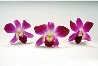 edible micro orchids
