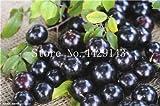 観賞用植物プリニアCauliflora盆栽100個ファミリーフトモモ科ジャボチカバ果樹工場ブラジルのブドウの木:1