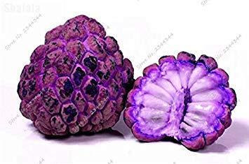 11pcs/sac de sucre exotique Graine extérieur ANNONA Squamosa Fruta tête Fruit de Bouddha bio Juicy Custard 2