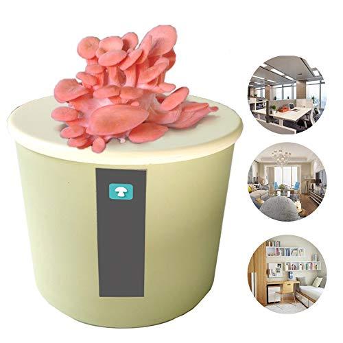 M-TOP Champignon a Faire Pousser Box Kit Champignon Bio DIY Naturel Boîte à Champignons sans Pesticides ni Conservateurs Tout Idée Cadeaugreen-Pink Oyster Mushroom