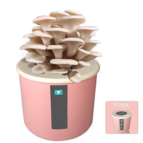FCCD Kit de Culture de Champignons Shiitake Bio, graines de Micro-Champignons d'intérieur bonsaï pour Planter des légumes, Sac de Spores prêt...
