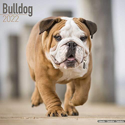 Bulldog - Bulldoggen 2022 – 16-Monatskalender: Original Avonside [Mehrsprachig] [Kalender]: Original BrownTrout-Kalender [Mehrsprachig] [Kalender]...