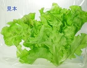 サニーリーフレタス ☆洗わなくていい無農薬野菜☆