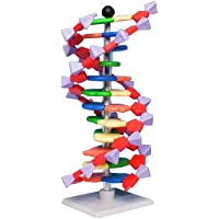 Science2Education AMDNA06012 Moly mod Advanced Molecular Model kit, 12 Layer