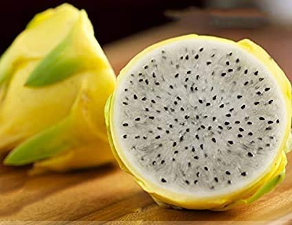 Rare Grand Dragon Jaune Fruit Pitaya Graines bio, Paquet professionnel, 30 graines / Paquet Sweet Selenicereus megalanthus e3267