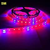 GCX - 5 m MORSEN 5050 Grow LED Flexible tira de luz 3 rojo 1 azul acuario invernadero planta hidropónica cultivo lámpara (12 V) protección ocular