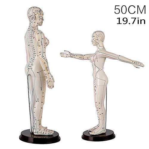 Weibliches Modell Menschliche Akupunktur Akupunktur, Körper Akupunkturmeridiane Lernen Modell Stift Flipchart TCM,Weiß