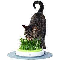 Catit Design Senses–Juego de Hierba para Gatos