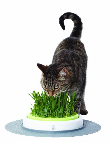 Catit Design Senses – Juego de Hierba para Gatos