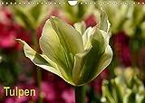 Tulpen (Wandkalender 2022 DIN A4 quer)