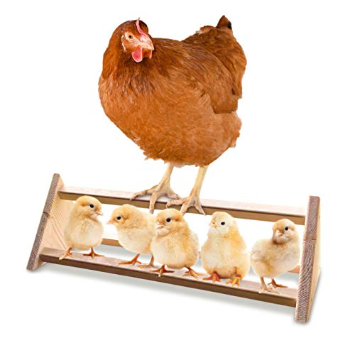 Product Image 1: Backyard Barnyard Chicken Perch