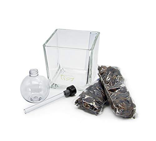 FLORIS Cube für Orchideen (Glas - transparent). Natürlich bewässern im Glastopf.