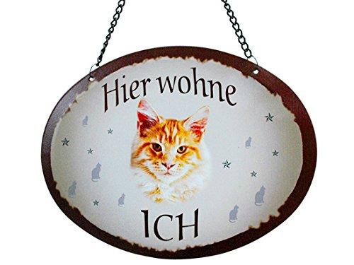 Pfronten Türschild Katze Ingwer (30), Blechschild Outdoor, Tierschild wetterfest