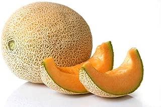 30+ ORGANICALLY GROWN Ananas Pineapple Melon Cantaloupe Seeds Heirloom NON-GMO