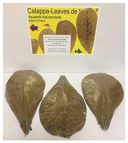 Catappa-Leaves.de Aquaristik Naturprodukte Import & Export 30 Seemandelbaumblätter 10-15cm Premiumqualität in Folie