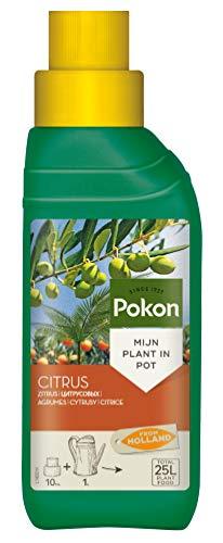 Pokon Zitrus- und Mediterraner Pflanzendünger, Spezial Flüssigdünger, für alle Zitrus Pflanzenarten in Töpfen, 250 ml