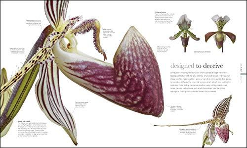 Flora: Inside the Secret World of Plants