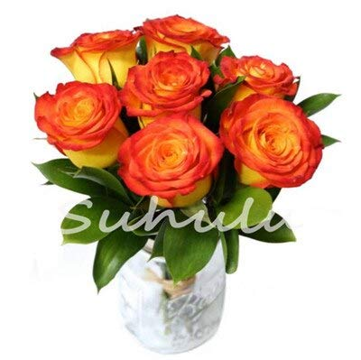 ! 200 Pcs/Bag Mixed Rose Bonsai, Rare Color Popular Garden Flower Flores Perennial Seed Flower Plant for Home Garden - (Color: 9)
