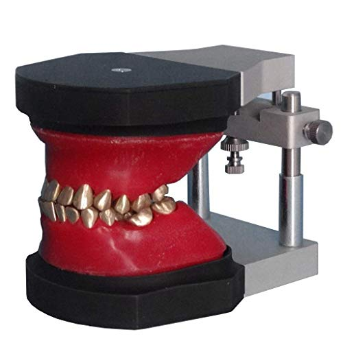 Best 3d dental models and educational materials review 2021 - Top Pick