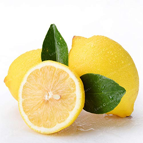 Bloom Green Co. 30 Pcs Lemon Bonsai Fresh Juicing Edible Healthy Exotic Ornamental Tropical Fast Growing Citrus limon Fruit Tree Bonsai Potted: 1