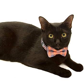 Joytale Collier pour Chat Personnalisable avec Clochette et Cravate,Colliers Identité Chats Gravé avec Nom et Telephone,Orange