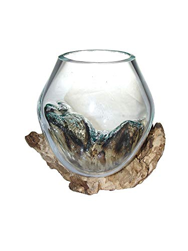 SAWA Spezial Deko-Vase Glasvase Blumenvase XS H 15 cm incl. Holz Ø Glas ca.12cm auf Treibholz/Wurzelholz Vase mit Holz