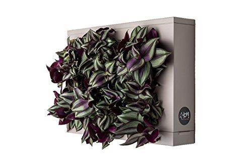 Mini Jardin Vertical Beige para 6 Plantas con Sustrato Natural Premium e Instrucciones. Cuadro Vegetal, Maceta de Pared, Maceta para Colgar.